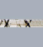 Fibra de lino (imagen de www.didymos.de)